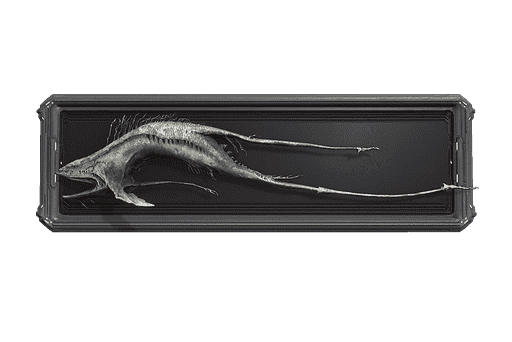 Mawfish Trophy